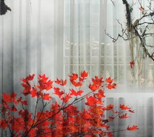 Комплект фотоштор Красный клен