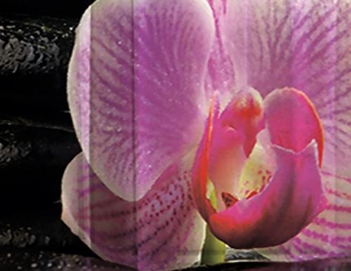 Тюль 3D / фототюль Орхидея розовая