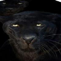 Постельное белье Пантера 030