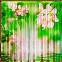Тюль 3D / фототюль Яблоневый цвет