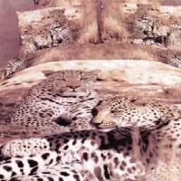 Постельное белье сатин Дикие кошки 3D 076