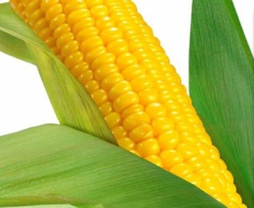 Подушка кукурузное волокно