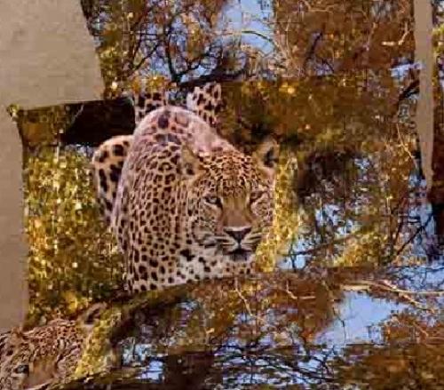 Постельное белье Леопард 153