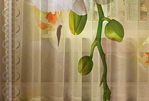 Тюль 3D / фототюль Аромат