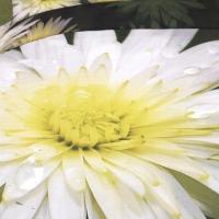 Постельное белье белые цветы 081