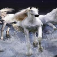 Постельное белье сатин 3D Дикие лошади 082