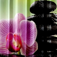 Фотошторы Орхидея розовая
